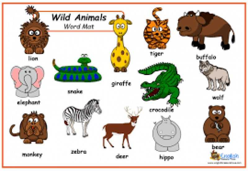 Animals- worksheets